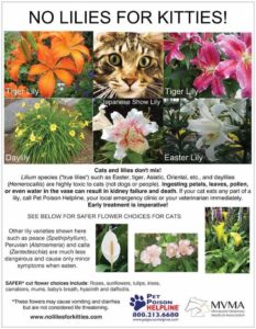 cat's and lilies